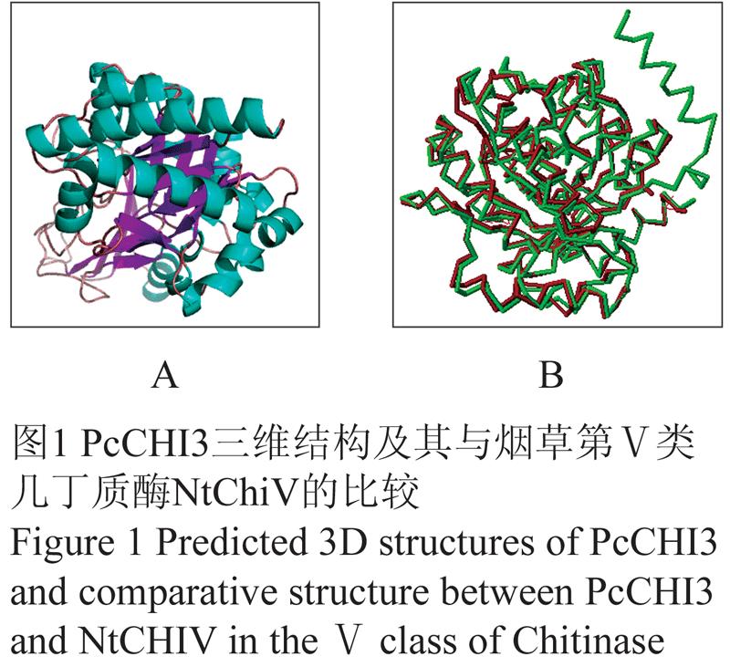 图1 pcchi3三维结构及其与烟草第Ⅴ类几丁质酶ntchiv的比较
