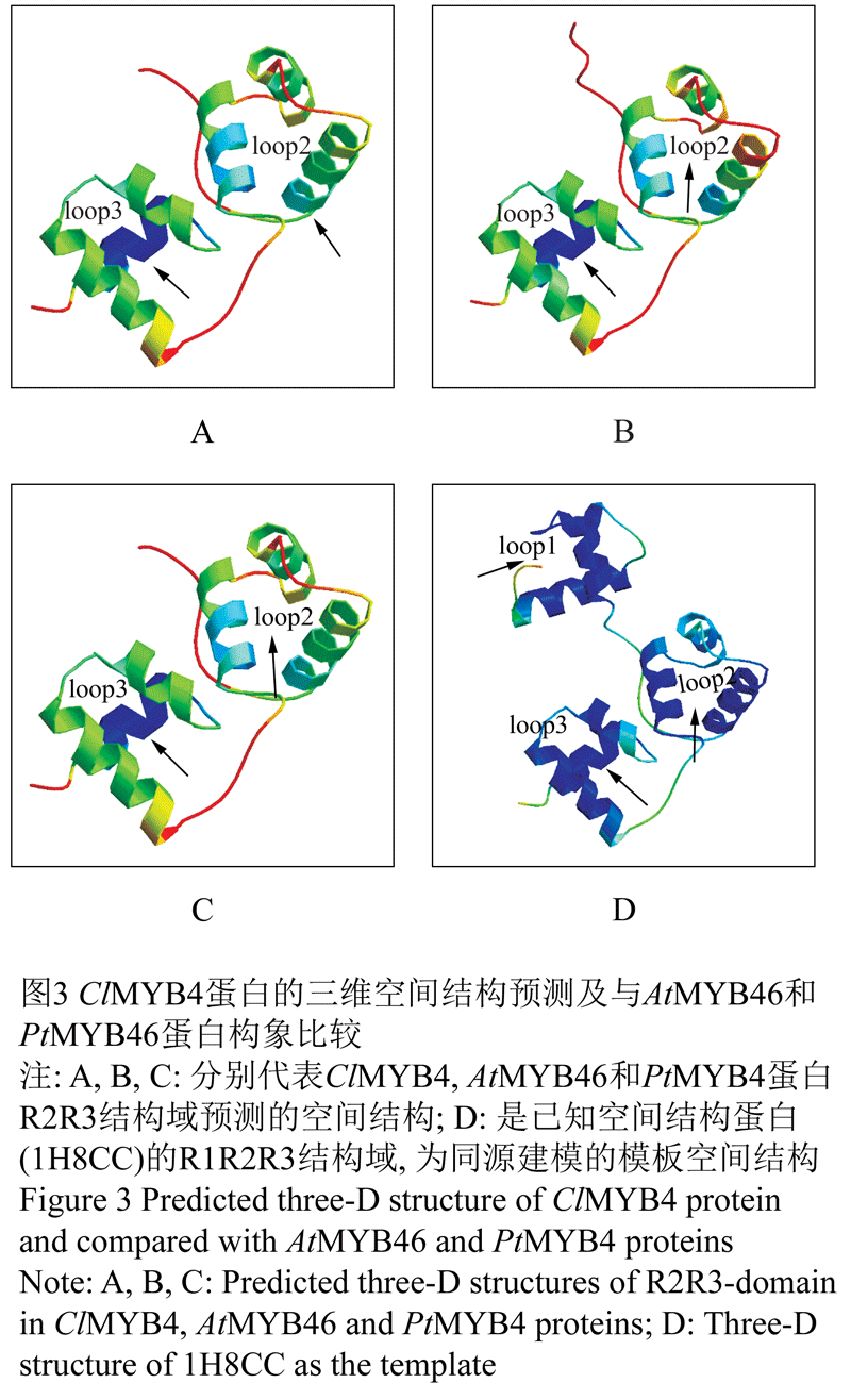 et al., 2006),并与PtMYB4和AtMYB46蛋白的进空间结构分析比较。MEGA 5.0构建基于蛋白序列的基因进化树。 3.2.3 ClMYB4蛋白原核表达载体的构建 根据原核表达载体pET-30b (+)的MCS位点及翻译起始位点特征,设计带有限制性内切酶Hind ,BamH 酶切位点的引物,扩增ClMYB4的蛋白编码序列,不包含内含子以保证与His6-tag的正常衔接而获得His标签的重组蛋白。经双酶切连接反应后转化大肠杆菌JM109,筛选阳性克隆子测序鉴定重组质粒的正确性。 引物序列